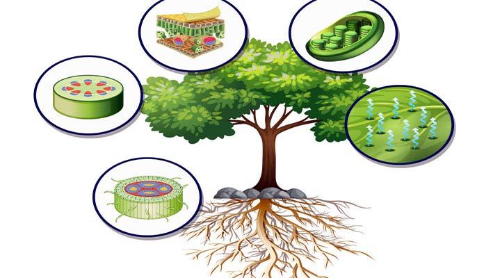 زیست-گیاهی-نظام-جدید